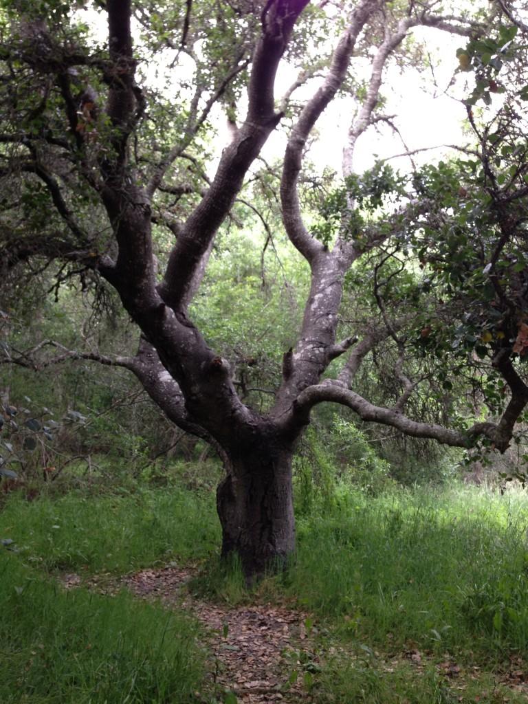 ancestor-tree