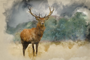 Watercolor,Painting,Of,Portrait,Of,Majestic,Powerful,Adult,Red,Deer